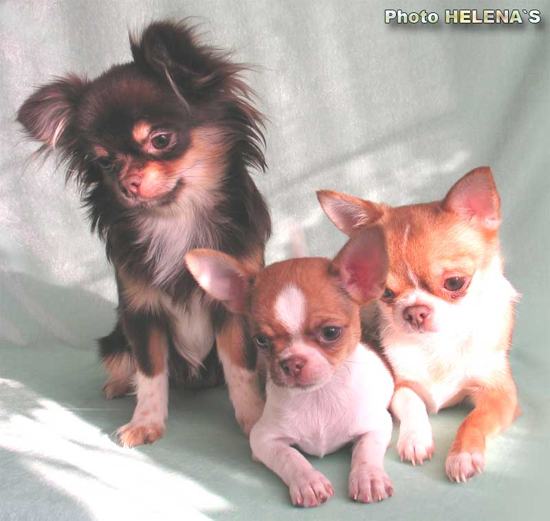 Вязанные кофты на собак